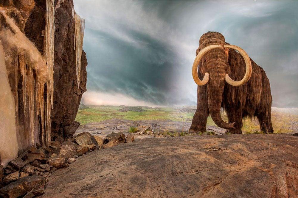 Royal B.C. Museum - Mammoth