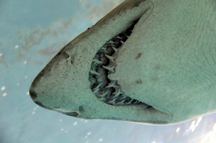 Underwater with a shark's teeth