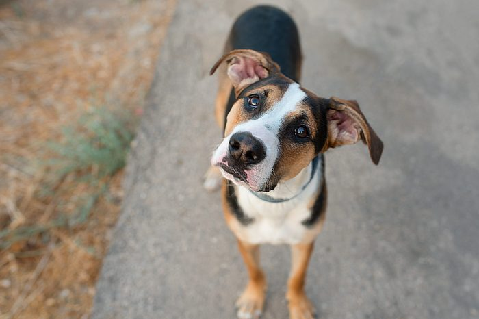 Dog playing outside. Curious dog looking at the camera. Close-up of a young mix breed dog head outdoors in nature. Homeless mongrel pets waiting for a new owner.Dogs Head Tilt to hear us better