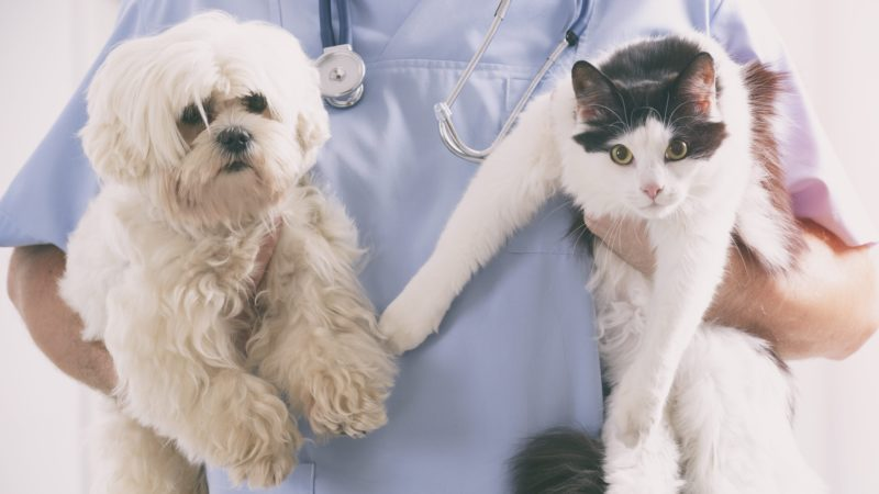 Vet with dog and cat in his hands