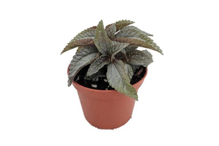 08_Friendship-plant
