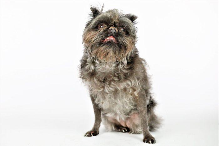 ugly dog monkey