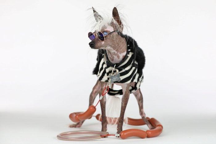 ugly dog rascal deux