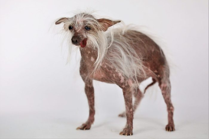 ugly dog miss moogie