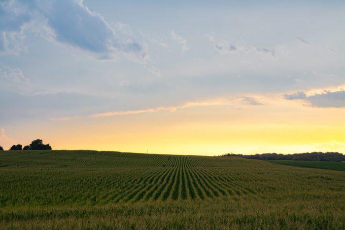 Afternoon light after a Summer rain over cornfield. Bureau County, Illinois, USA