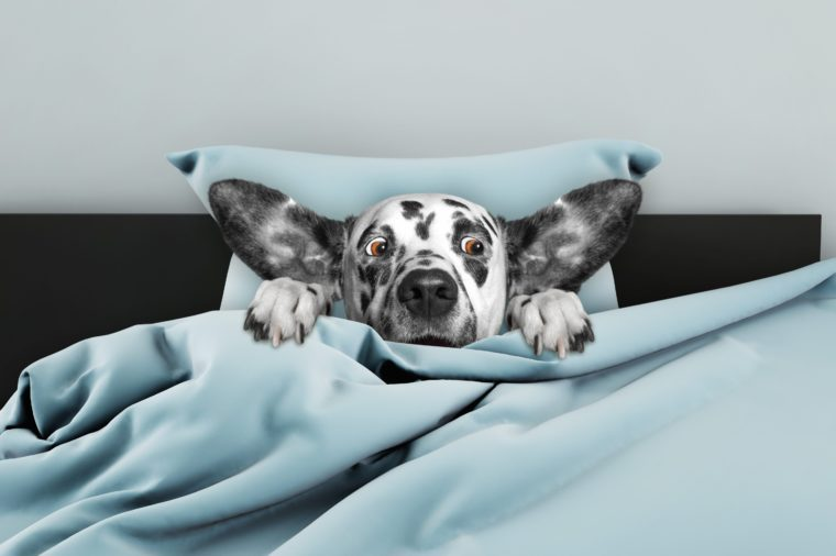 Cute dog sleeping and afraid of something