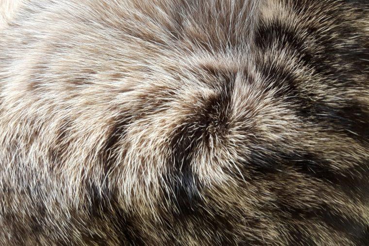 Fur cat,hair cat