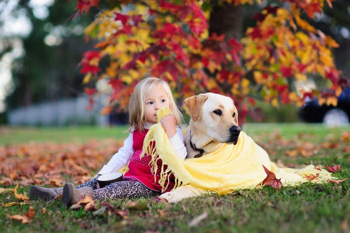 Outdoor portrait of a cute little child, a baby or toddler girl with her dog, a yellow labrador sitting on the ground in a park with yellow and red autumn fall leaves in the background