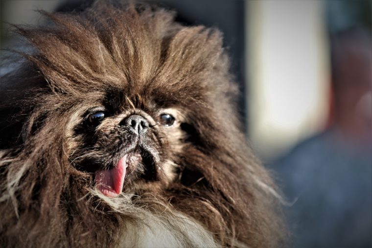 50 Ugly Dogs That Are Still So Darn Cute Reader S Digest