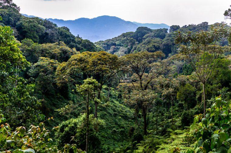 Tropical rain forest, Nyungwe National Park, Rwanda, Africa, wide format