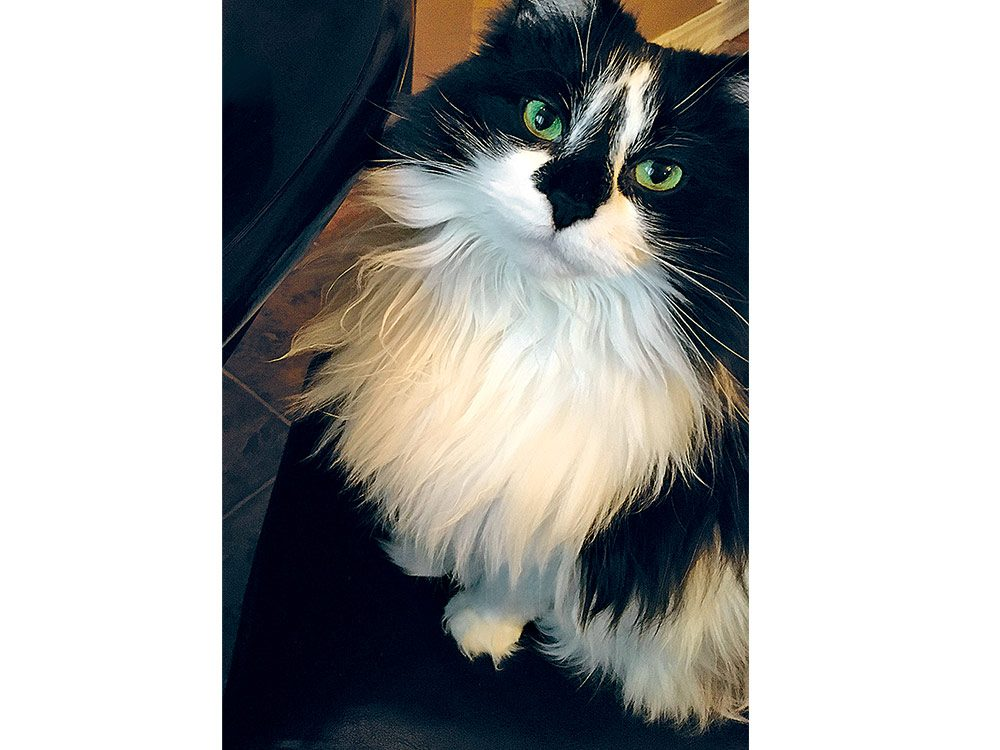 Mavis the cat