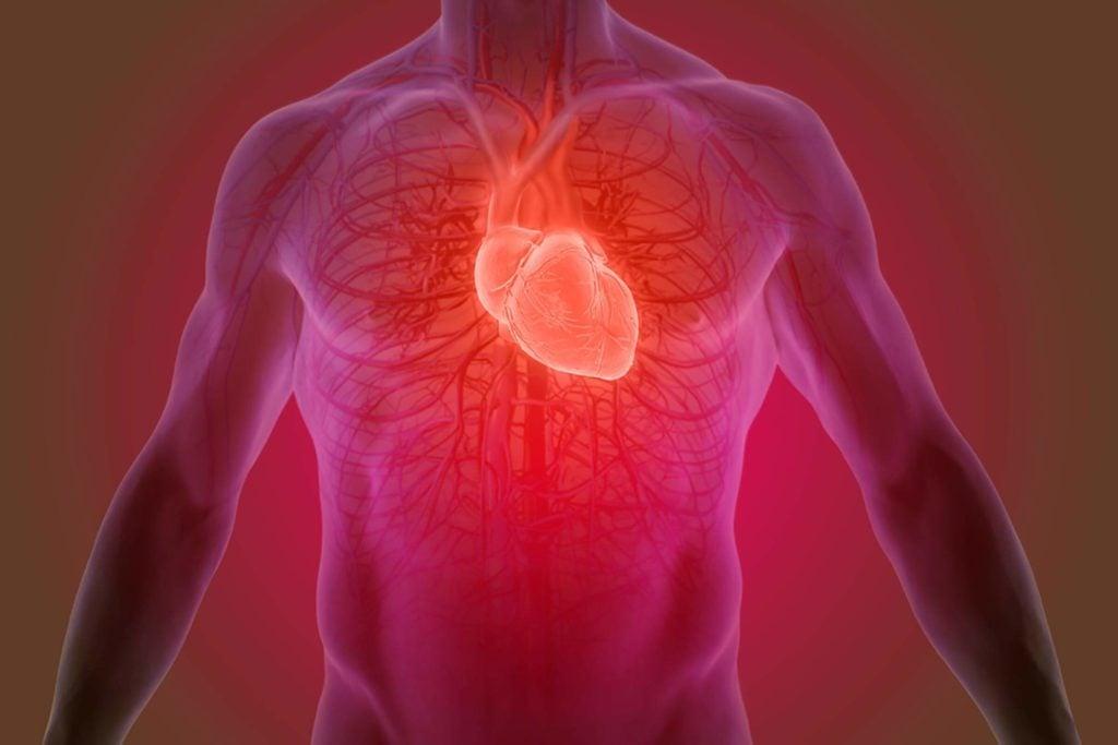 3d illustration of the human heart anatomy