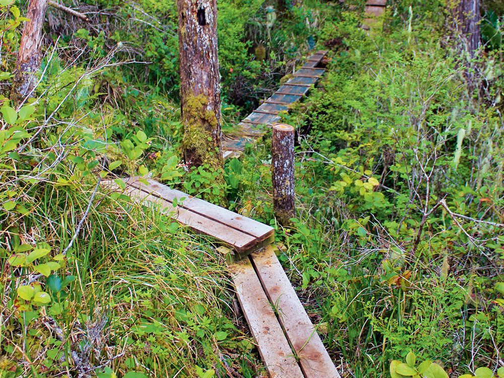 Boardwalks, bridges and ladders that Gordon and Cindy built for visitors to explore Calvert Island