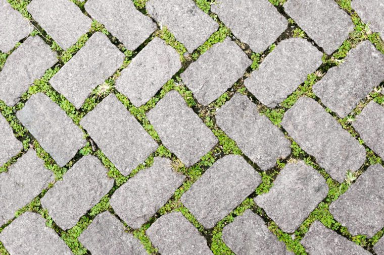 Grass Stone Floor texture pavement design. greenery color