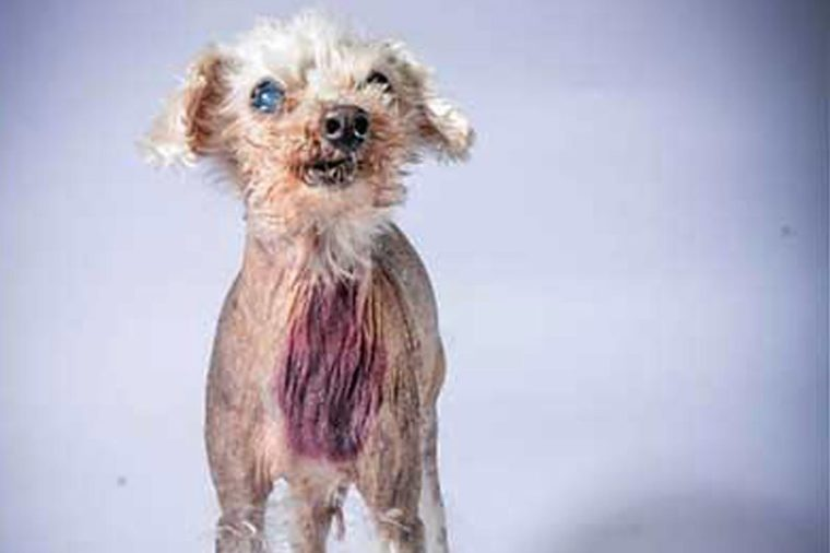 ugly dog angus