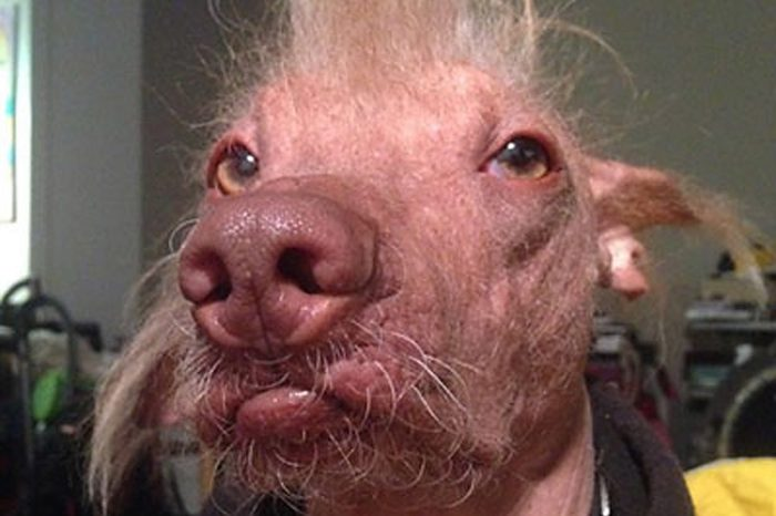 ugly dog morris