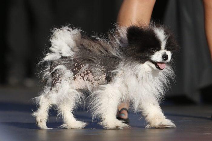 ugly dog mayzie brown