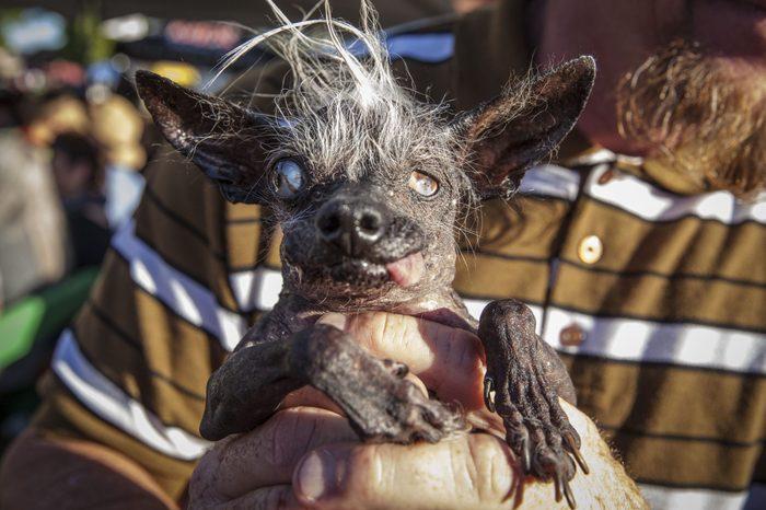 ugly dog sweepee rambo