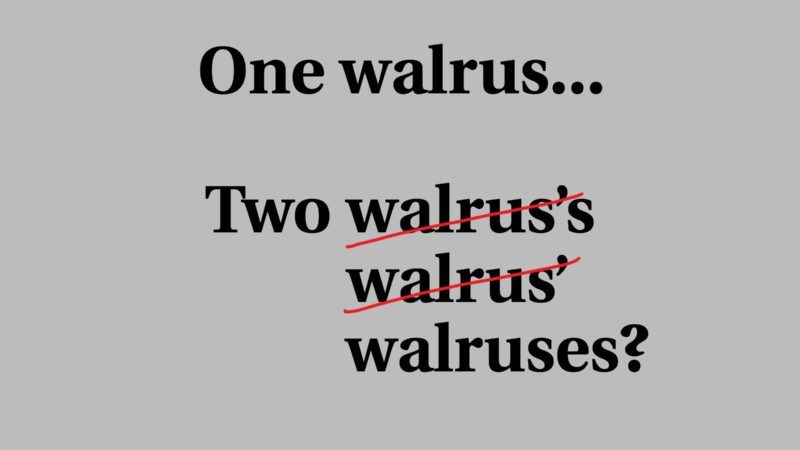 walruses plural s