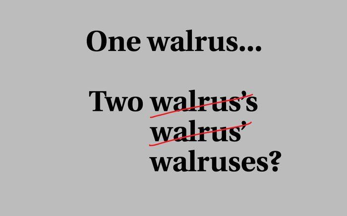 walruses plural s