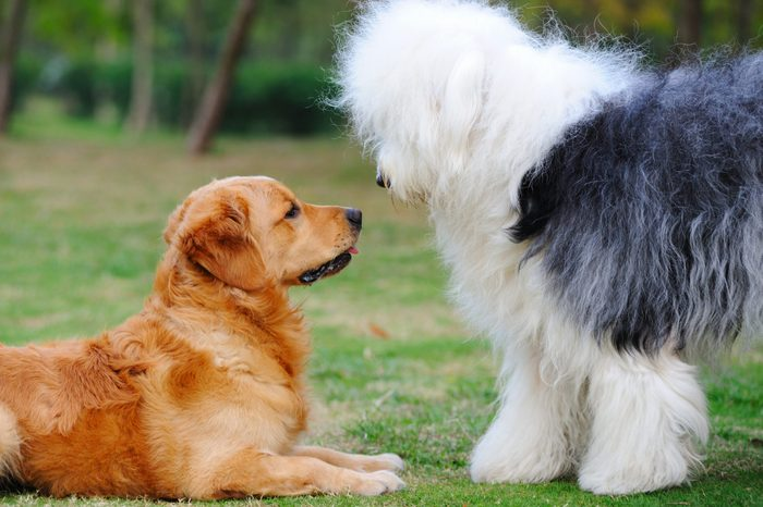 Two dogs staring at each other with curiosity