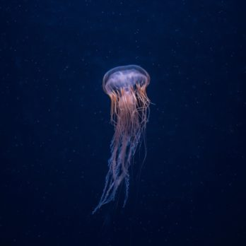 13 Weirdly Fascinating Facts About Jellyfish