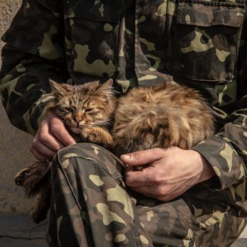 10 Stories of Heroic Cats Who Served in the Military