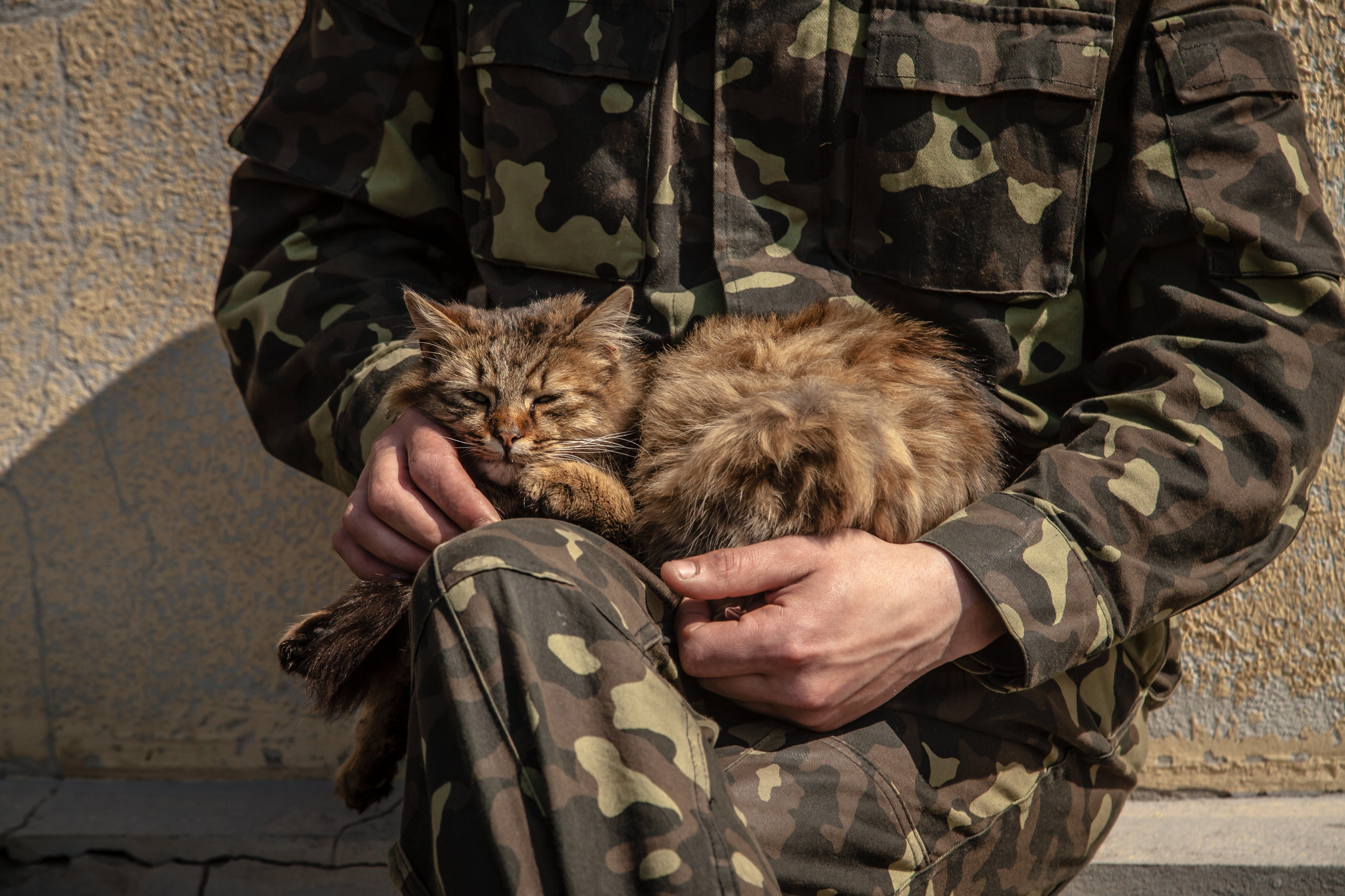 army pet cat