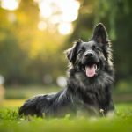 12 Telltale Signs Your Dog Is Happy