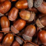 7 Things You Can Make With All of Those Acorns
