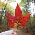 A Walk in the Woods: 20 Stunning Nature Photos from Across Canada