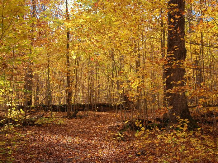 Walking the forest trail at McLean's Park on Manitoulin Island