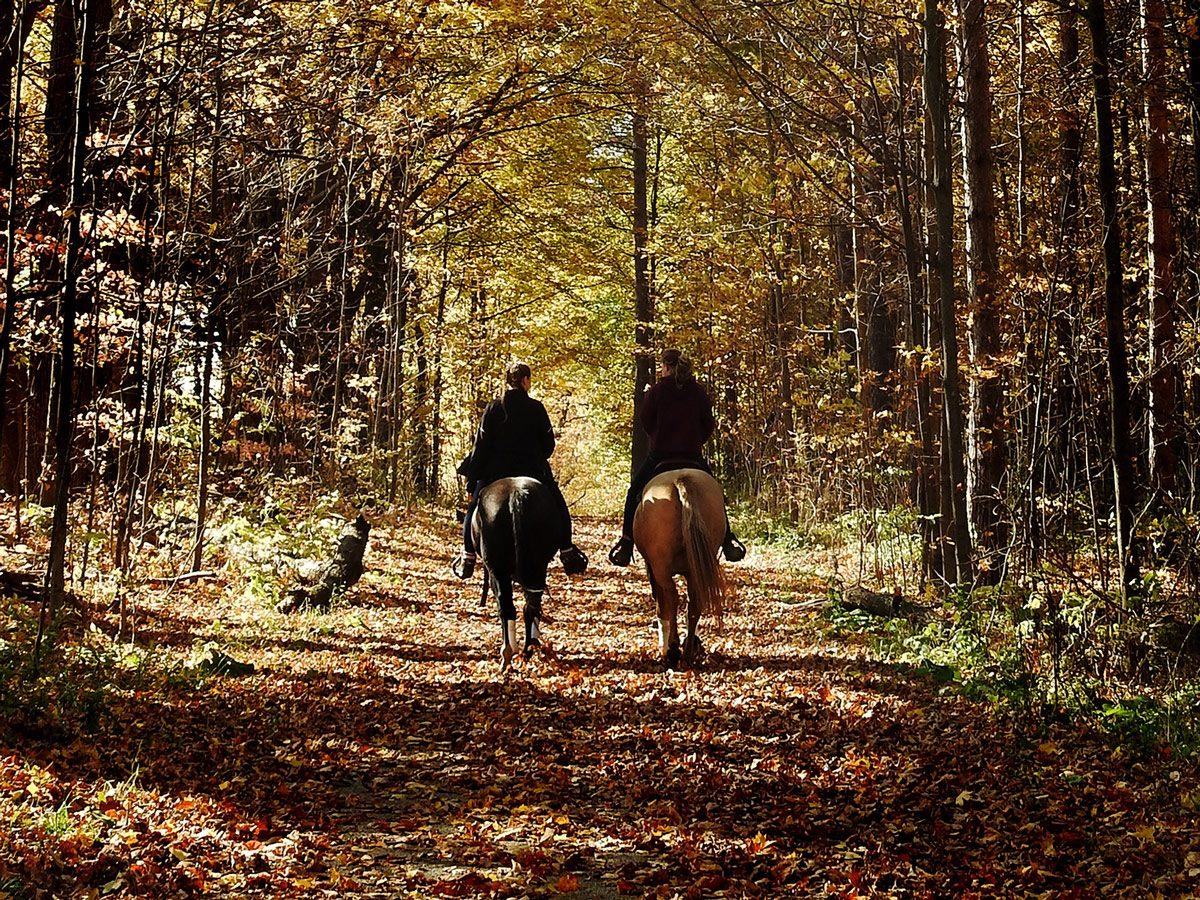 Horseback riding in the York Regional Forests Trails Hall Tract