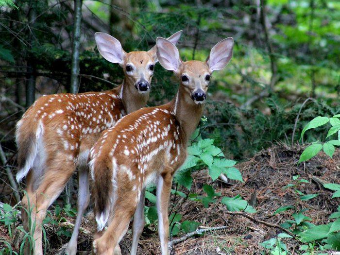 A pair of baby deer in Bon Echo Provincial Park