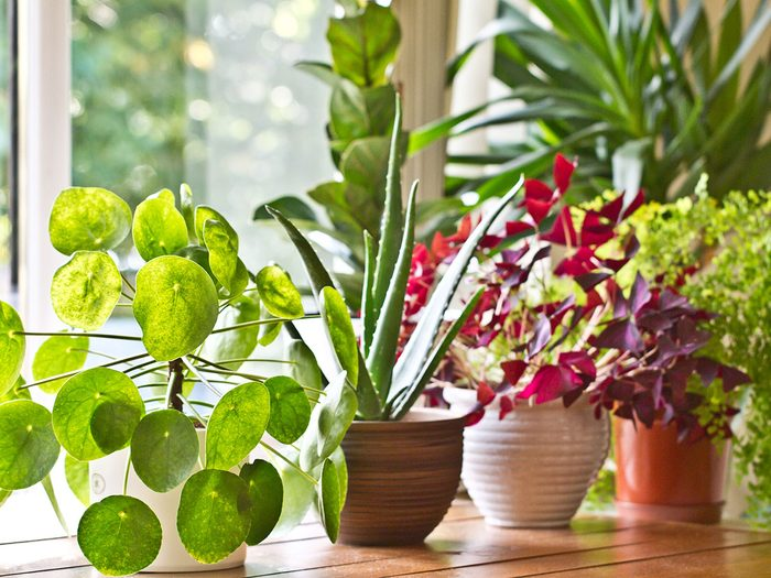 Window sill with house plants.