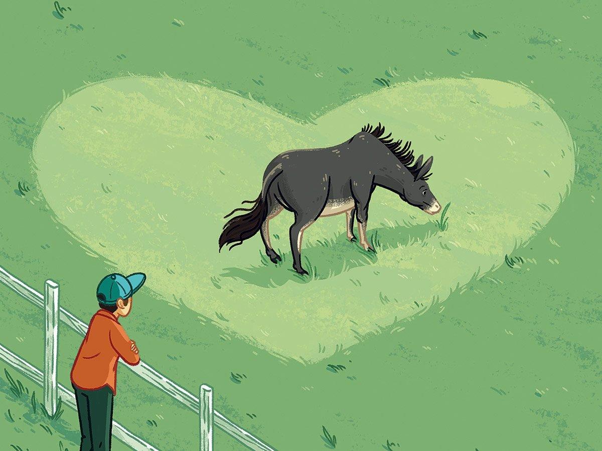 Franco the Donkey