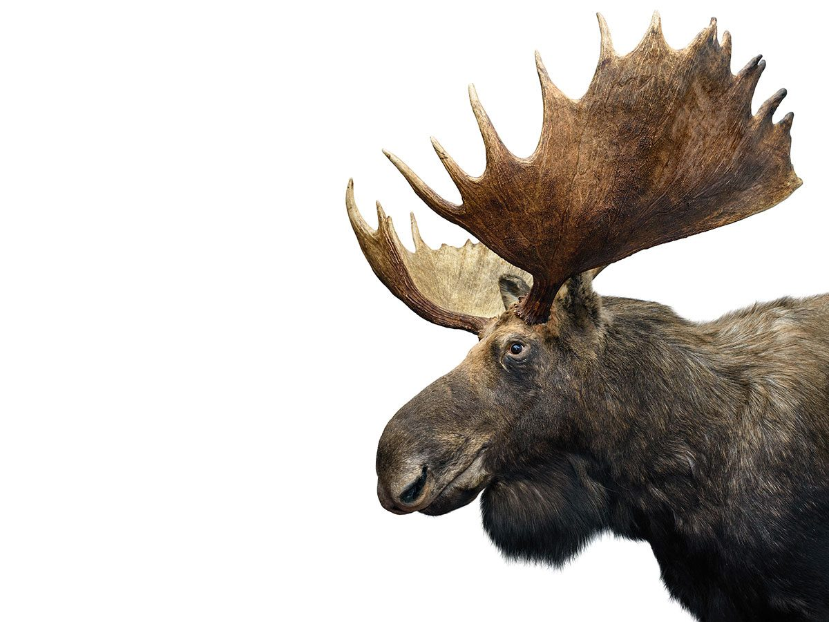 Funny work jokes - moose