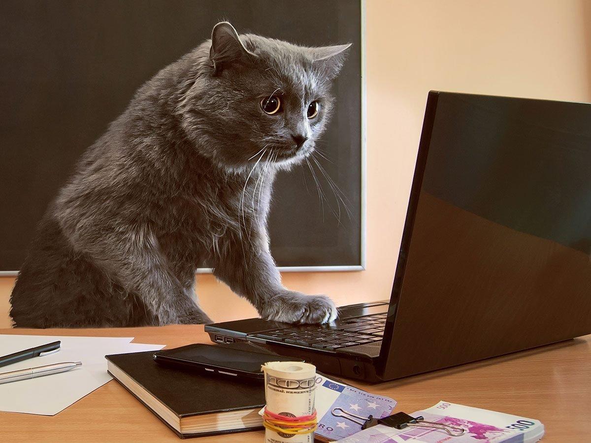 Hilarious work jokes - cat at office