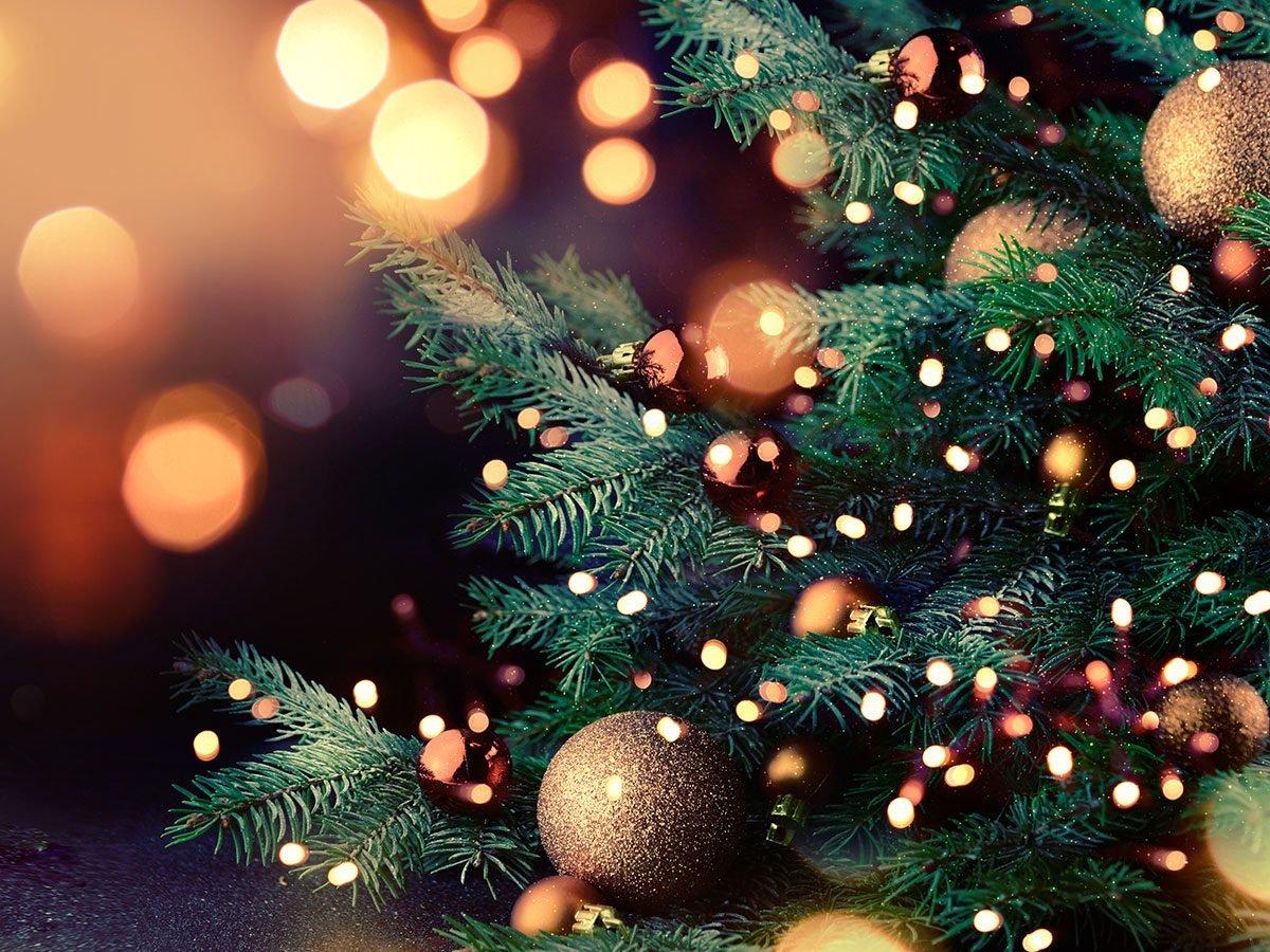 Holiday disasters - toxic Christmas tree