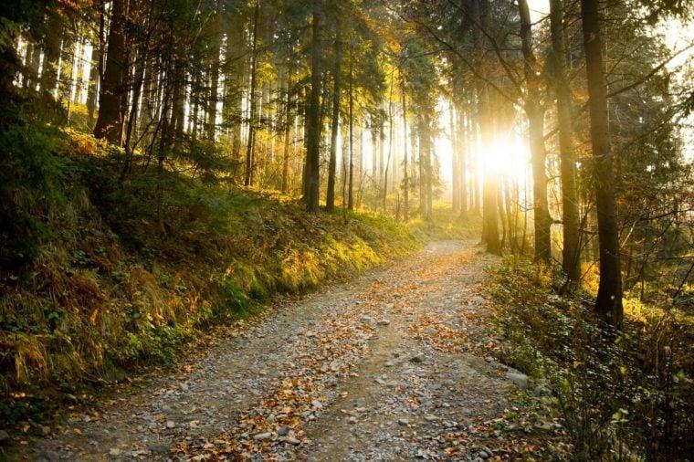 Beautiful autumn forest mountain path at sunset