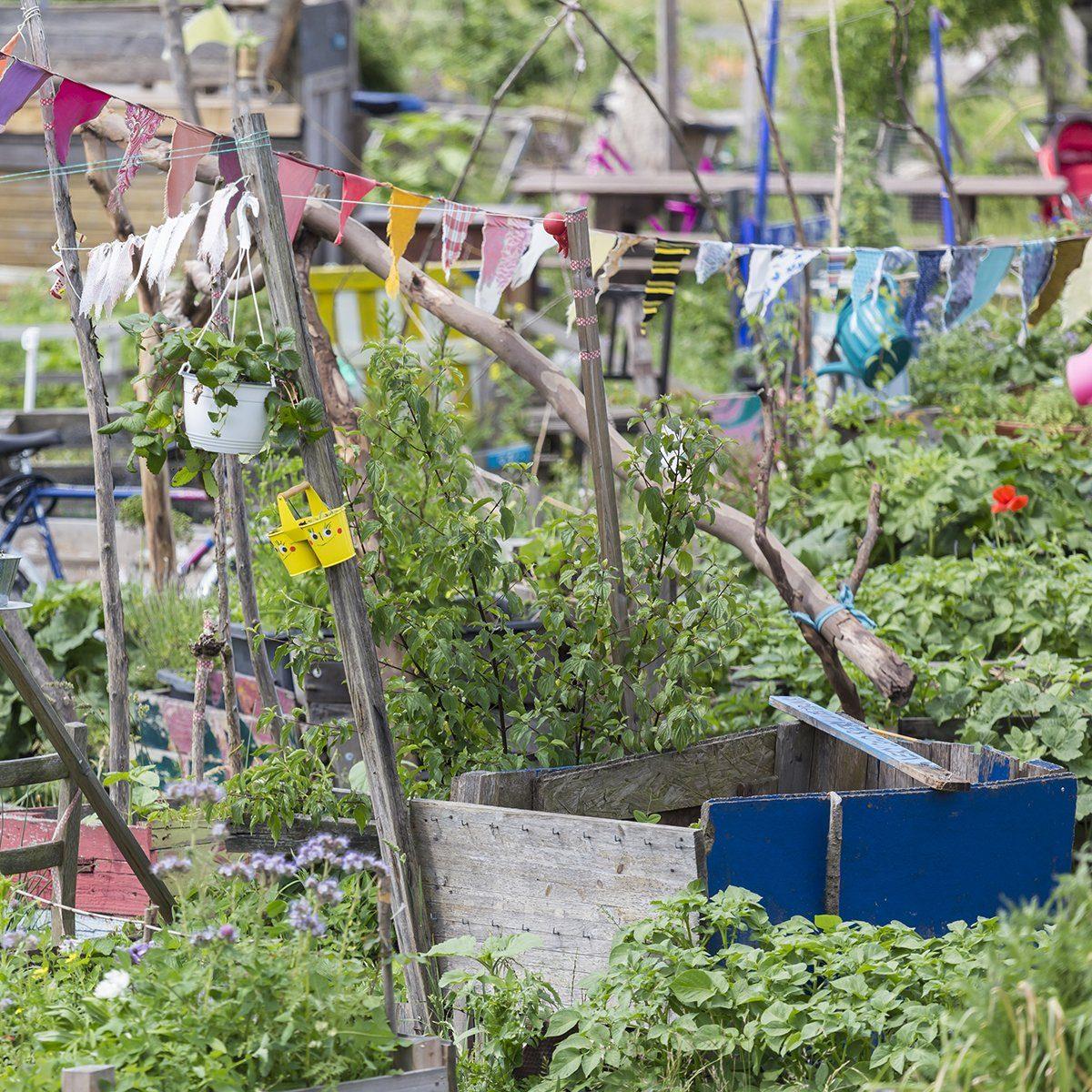 urban gardening at tempelhofer feld berlin germany; Shutterstock ID 656036599; Job (TFH, TOH, RD, BNB, CWM, CM): TOH
