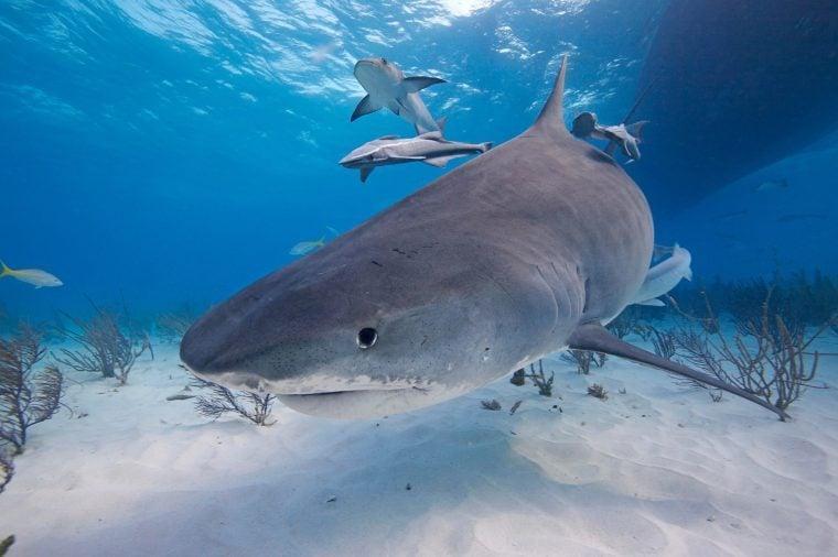 tiger sharks in bahamas, Jordan Lindsay travel nightmare