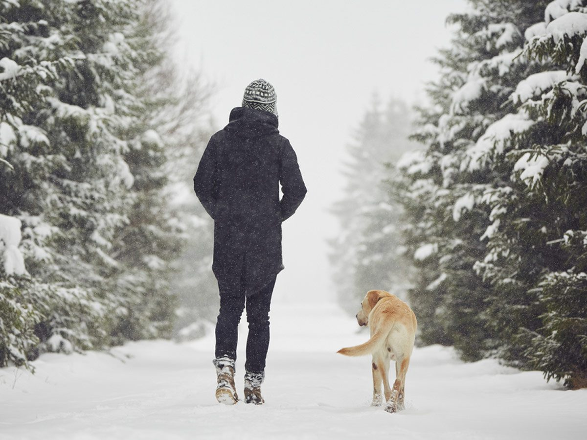 Dog walking with its owner in winter landscape
