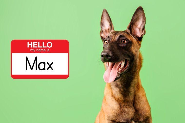most popular dog names 2019