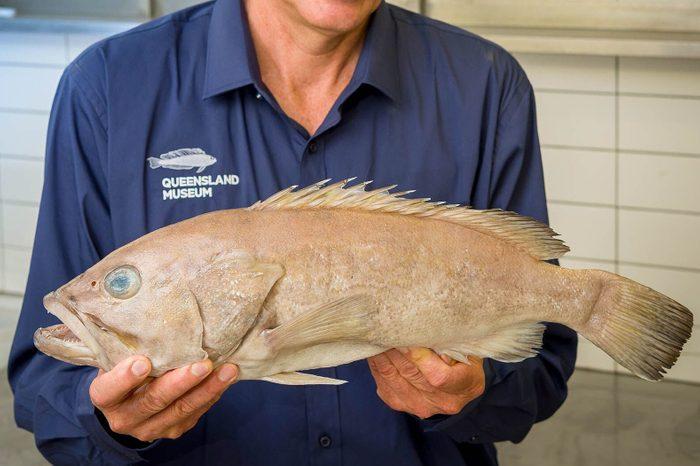 new species of cod fish