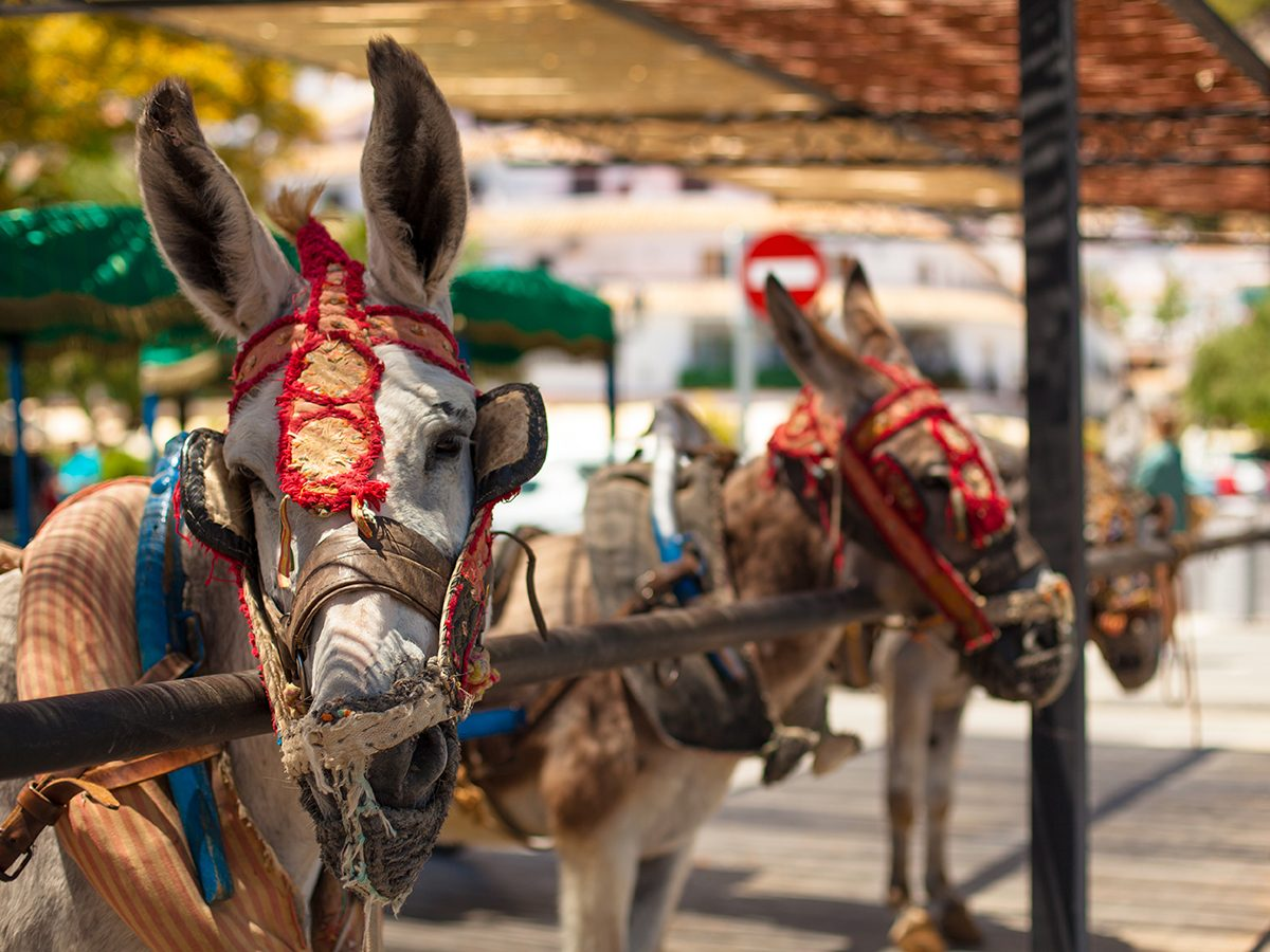 Good news - donkey rights in Spain
