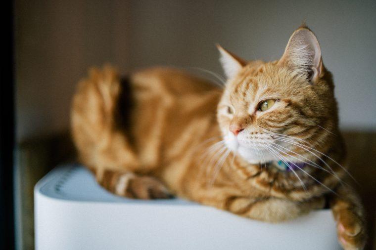 Beautiful cat at home. Domestic animal