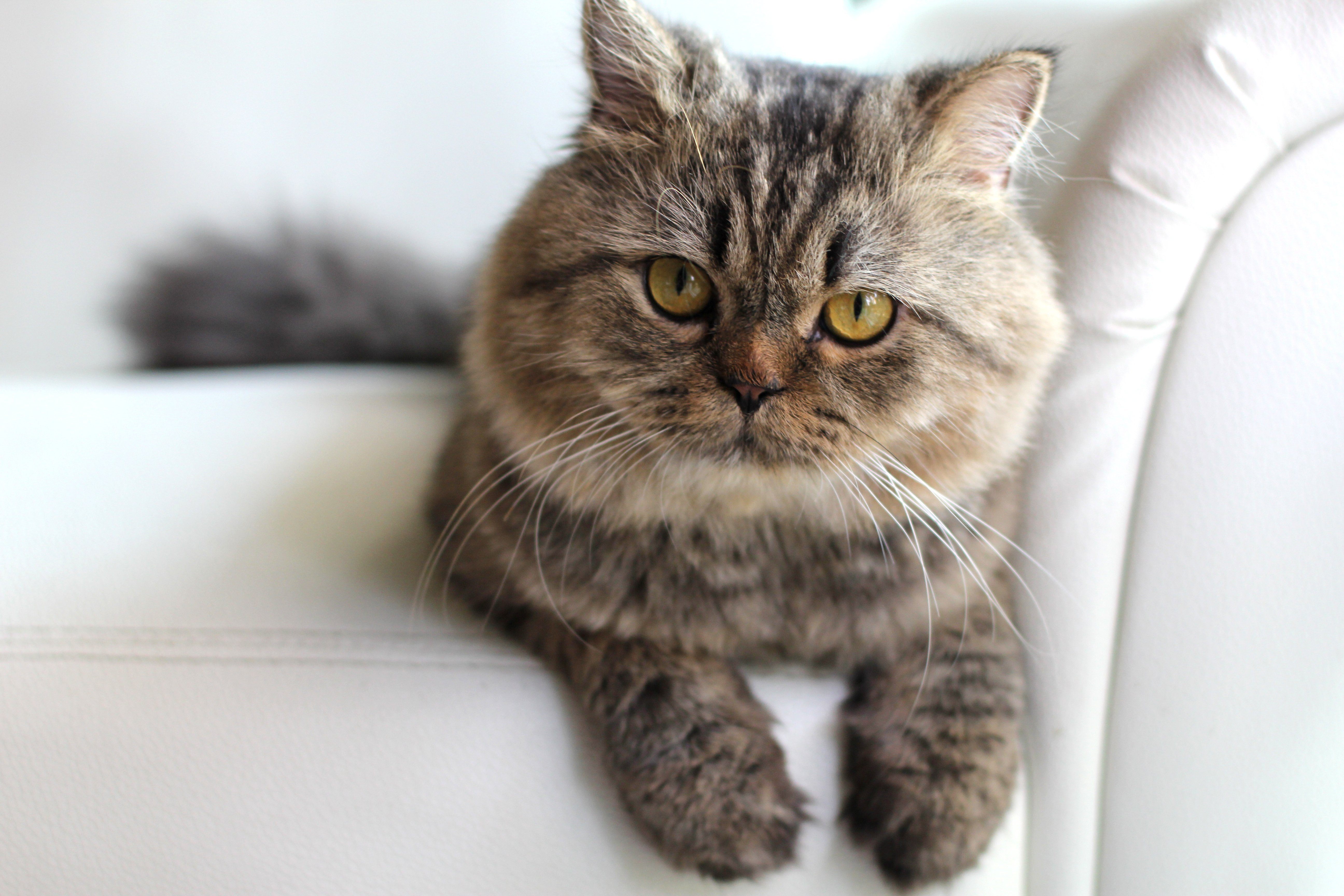 Cat Pregnancy Tests Petcarerx