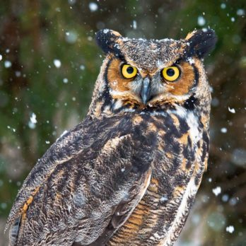 This is What It's Like Photographing Birds in the Dead of Winter