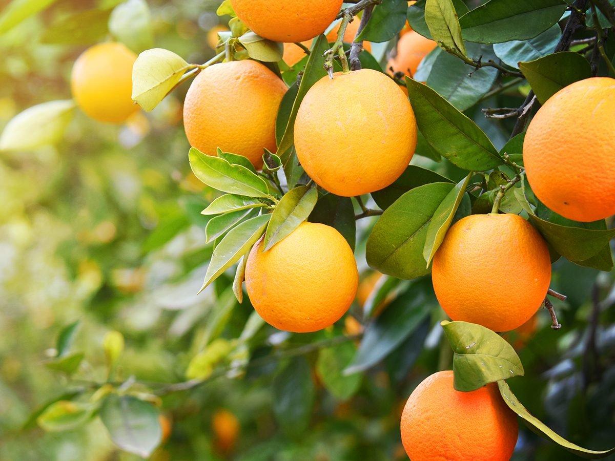 Glowing skin secrets - oranges